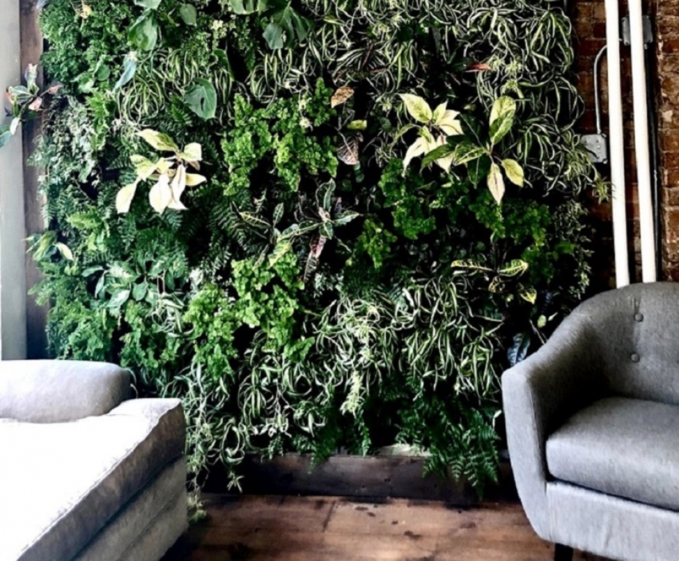 Living Wall to Compliment a Space